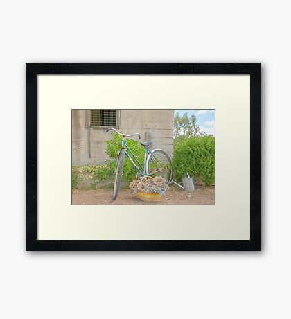 Watering the garden..... old bicycle... Framed Print