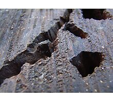 Red Gum Valley Photographic Print