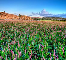 Field of Pink by Bob Larson