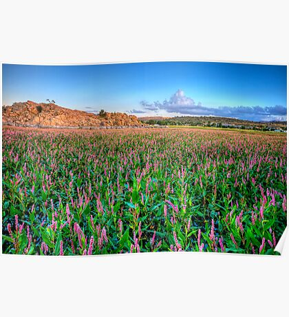 Field of Pink Poster