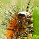 caterpillar munch-time by gaylene