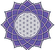 Flower Of Life by GalacticMantra