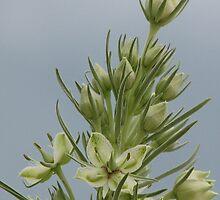 White Flower - Green Gentian by Bill Hendricks
