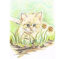 Kitty amongst the Flowers Photographic Print