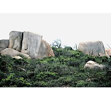 'If You Love Me Protect Me' - Wilson's Promontory National Park - Australia - 2010 Photographic Print