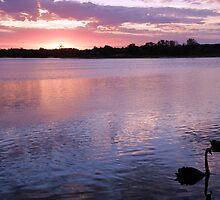 Swanrise! by TracyD