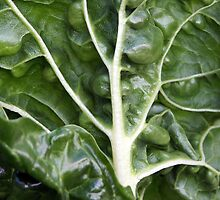 Silverbeet by Tiffany Dryburgh