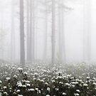 20.6.2015: Blooming Marsh Tea by Petri Volanen