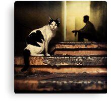 The Street Cat #0101 Canvas Print