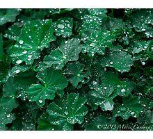 Green Earth Photographic Print