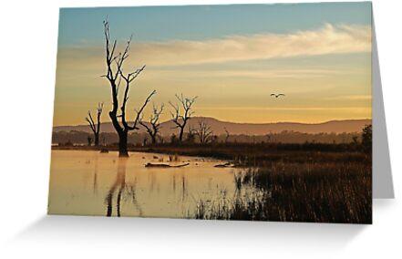 Flight, Lake Fyans, Grampians by Joe Mortelliti