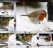Robin Collage by AnnDixon
