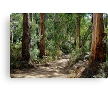 Newcomb Spur Track,Otway Ranges. Canvas Print