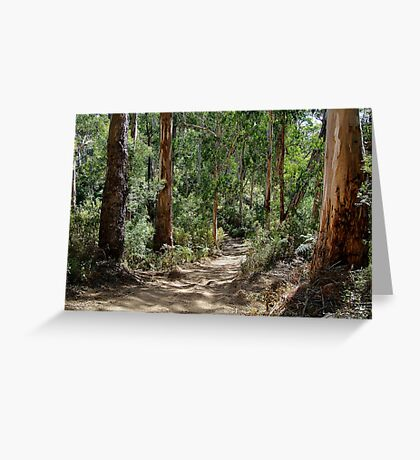 Newcomb Spur Track,Otway Ranges. Greeting Card