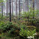 20.6.2015: Midsummer Greenery by Petri Volanen