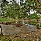 Flooded Creek by GailD