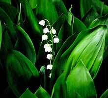 Lily Of The Valley by JoeGeraci