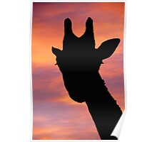Giraffe silhouette at quirky angle Poster