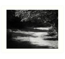 Woodland Shade - Burrs Country Park Art Print