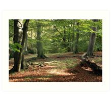 Tranquil Spaces Art Print