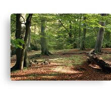 Tranquil Spaces Canvas Print
