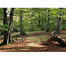 Tranquil Spaces Photographic Print
