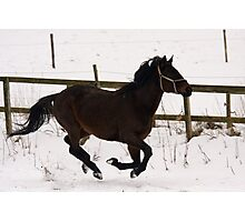 Running horse Photographic Print