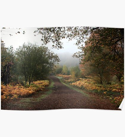 Misty Road of Autumn Poster
