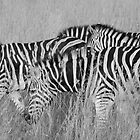 black stripes, white stripes by mellychan