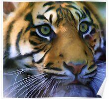 Sumatran Tiger - pseudo oil painting Poster