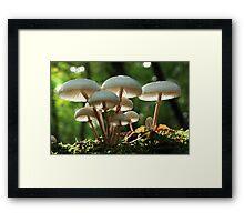Shroomville Framed Print