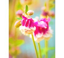 Meadow Flower Photographic Print