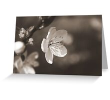 The Bloom of Another Day Greeting Card