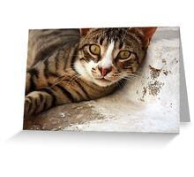 ... a particularly friendly Greek cat :) ... Greeting Card