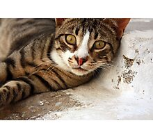 ... a particularly friendly Greek cat :) ... Photographic Print