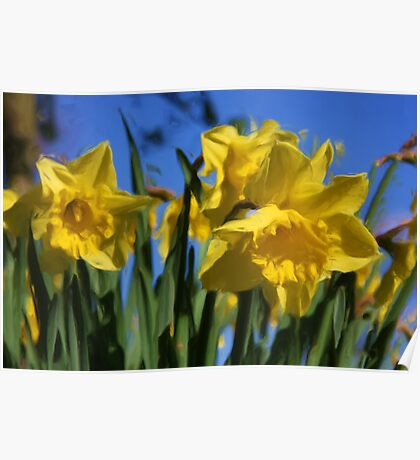 Daffodils in Spring time as pseudo oil painting Poster