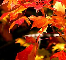 fiery leaves of fall...lords of karma by jammingene