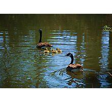 Swan Lake, Sumter,  South Carolina Photographic Print