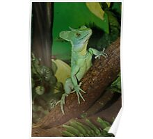 Plumed Basilisk called Shrek !! Poster