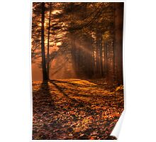 Morning Sun Rays in the Forest Poster