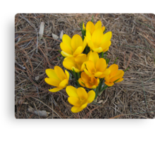 PROOF Groundhog Was WRONG! Spring Has SPRUNG!! Canvas Print
