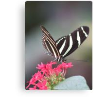 Black & white Zebra longwing (Heliconius Charitonius)  Canvas Print