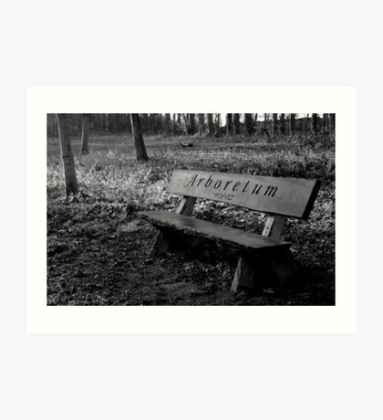 Bench in the trees Art Print