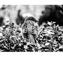 Paris City Bird Photographic Print