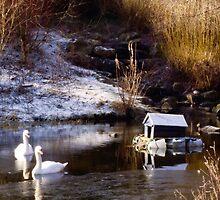 A Winters Morn by Lynne Morris