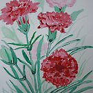 carnation by paula cattermole