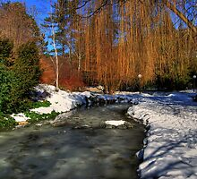 Small Pond by Klopocan