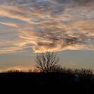 Whipped Sky by Jason Kiely
