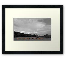 Select Herd Framed Print
