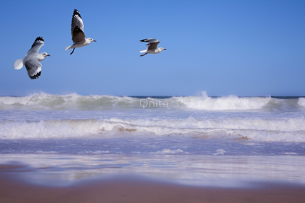 Seagulls and soft waves... by Qnita